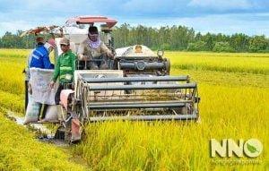 Giới thiệu trang tin Nông nghiệp Online