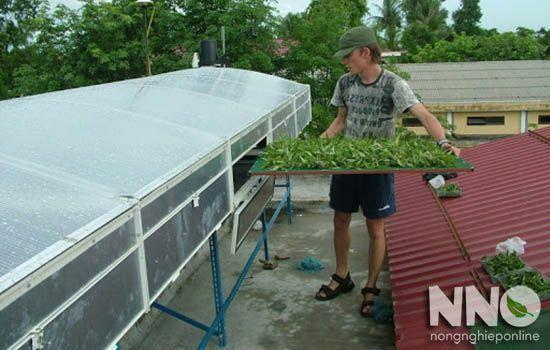 Máy sấy năng lượng mặt trời