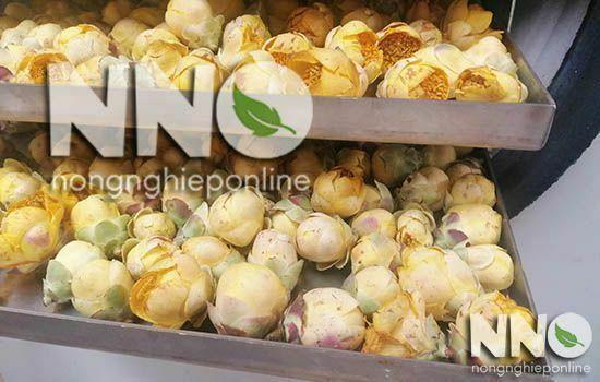 Sáy hoa trà vàng bằng máy sấy nông sản