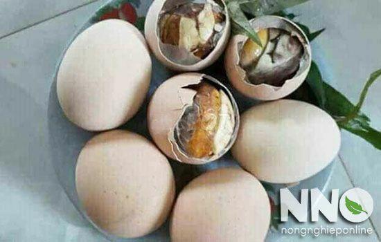 Cách ấp trứng gà lộn tại nhà, lưu ý khi chọn máy ấp trứng gà lộn