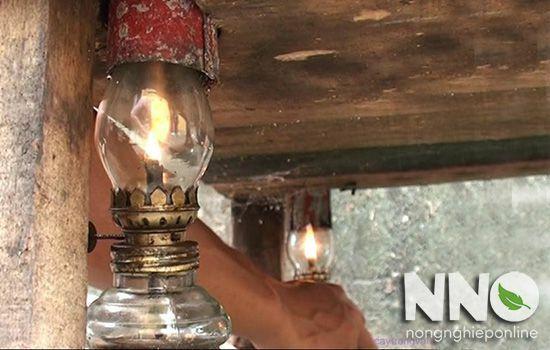 Ấp trứng gà bằng đèn dầu