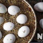 Cách ấp trứng gà bằng trấu