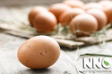 2 Cách bảo quản trứng gà để ấp bạn nên biết