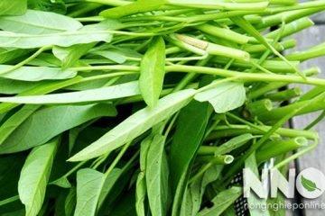 Cây rau muống cạn (rau muống lá tre), đặc điểm và cách trồng tại nhà