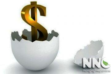 Giá máy ấp trứng hiện nay, tổng giá máy từ các thương hiệu phổ biến