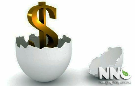 Giá máy ấp trứng hiện nay