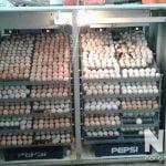 Máy ấp trứng công nghiệp