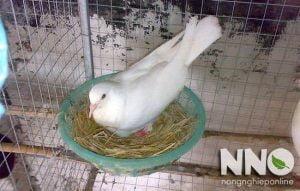 Top 10 thương hiệu máy ấp trứng bồ câu