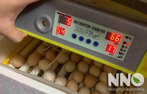 Máy ấp trứng CNE