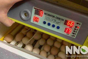 Công suất máy ấp trứng bao nhiêu? Máy ấp trứng có tốn điện không?