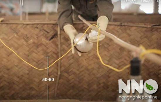 Cách làm chuồng úm gà con sau khi nở