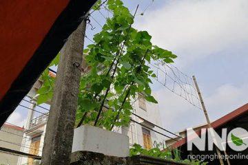Cách làm thùng xốp trồng rau thông minh tại nhà
