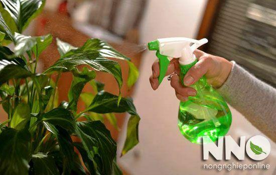 Cách bón phân NPK cho cây cảnh
