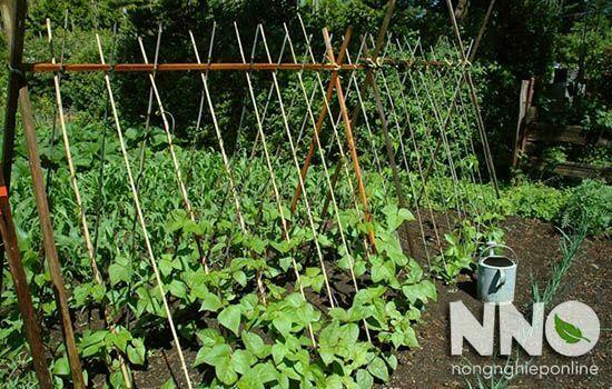 Cách làm giàn trồng cây dây leo tại nhà