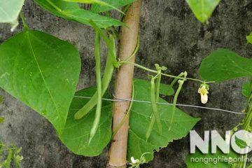 2 Cách làm giàn trồng cây dây leo tại nhà đơn giản