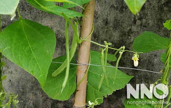 Cách làm giàn trồng cây dây leo tại nhà đơn giản