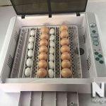 Máy ấp trứng nhập khẩu