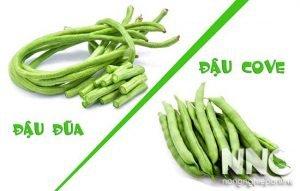So sánh đậu đũa và đậu cove