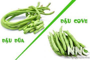 So sánh đậu đũa và đậu cove, loại đậu nào bổ dưỡng hơn