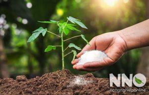 Tác dụng của phân đạm đối với cây trồng