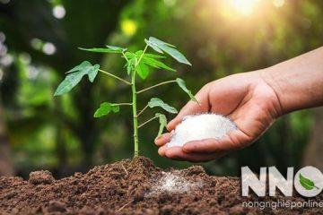 Phân đạm là gì và tác dụng của phân đạm đối với cây trồng
