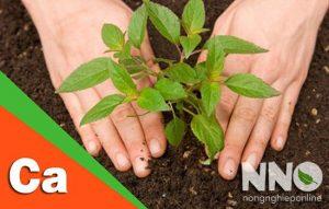 Cách bổ sung canxi cho cây trồng
