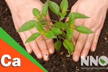 Tác dụng và cách bổ sung canxi cho cây trồng đúng cách