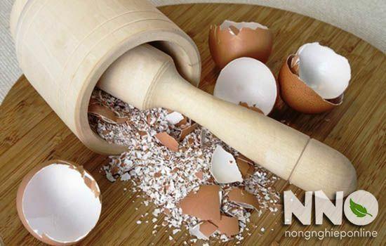 Giã nhỏ vỏ trứng để bón cho cây