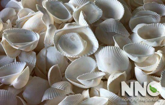 Cách bổ sung canxi cho cây trồng - dùng bột vỏ sò