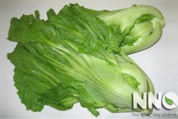 Cải bẹ xanh trị bệnh gì? Đôi điều nên biết khi ăn rau cải bẹ
