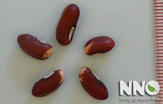 Hạt đậu đũa