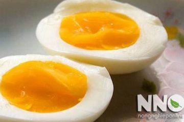 Trứng gà ăn bao nhiêu là đủ? 1 quả mỗi ngày hay 3 – 4 quả/tuần